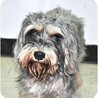 Adopt A Pet :: Casey - Port Washington, NY
