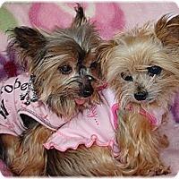 Adopt A Pet :: MiMi and Sushi - Palm City, FL