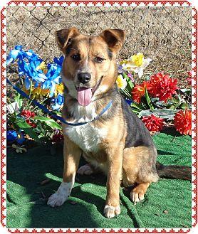 Collie/Shepherd (Unknown Type) Mix Dog for adoption in Marietta, Georgia - DANA (R)