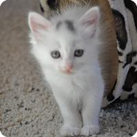 Adopt A Pet :: Lilly - Modesto, CA