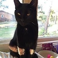 Adopt A Pet :: Tonka - Colorado Springs, CO