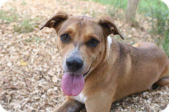 Terrier (Unknown Type, Medium)/Shepherd (Unknown Type) Mix Dog for adoption in Palmetto Bay, Florida - Sebastian