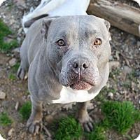 Adopt A Pet :: Prada! - Sacramento, CA