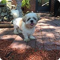 Adopt A Pet :: Maxi - Leesburg, FL