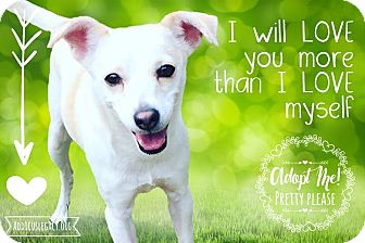 Chihuahua/Terrier (Unknown Type, Medium) Mix Dog for adoption in Austin, Texas - Milly