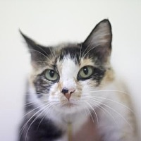 Adopt A Pet :: Tonya - Mountain Home, AR