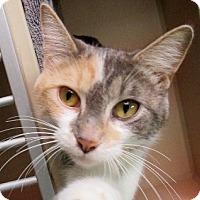 Adopt A Pet :: Eliza - Lloydminster, AB