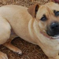 Adopt A Pet :: MISSY - troutman, NC