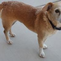 Adopt A Pet :: Missy - Tucson, AZ