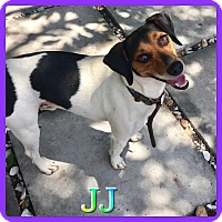 Adopt A Pet :: JJ - Hollywood, FL