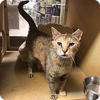 Adopt A Pet :: Brenda - Albany, NY