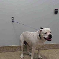 Adopt A Pet :: CHETA - Miami, FL