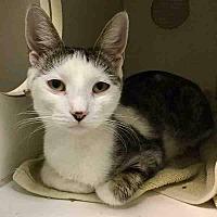 Adopt A Pet :: MAGGEE - Hampton, VA