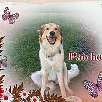 Adopt A Pet :: Patches - Houston, TX