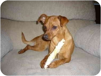 Chihuahua/Dachshund Mix Dog for adoption in Sacramento, California - Princess