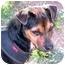 Photo 1 - Miniature Pinscher/Terrier (Unknown Type, Medium) Mix Dog for adoption in Sedona, Arizona - Holly