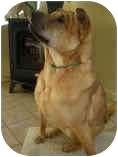 Shar Pei Dog for adoption in Bethesda, Maryland - Deja