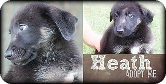 German Pinscher Mix Puppy for adoption in New Oxford, Pennsylvania - Heath