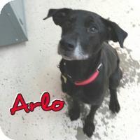 Labrador Retriever Mix Dog for adoption in Cedar Rapids, Iowa - Arlo