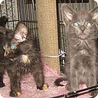 Adopt A Pet :: Cassie&Sassie - Dallas, TX