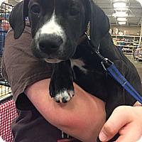 Adopt A Pet :: Raine - Pittstown, NJ