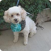 Adopt A Pet :: **MURPHY** - Stockton, CA