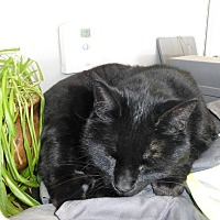 Adopt A Pet :: Phoebe - Edmonton, AB