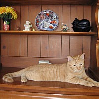 Adopt A Pet :: Harry - Orland Park, IL