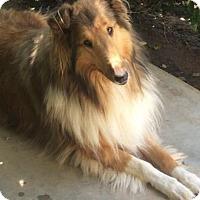 Adopt A Pet :: Lassie - Riverside, CA