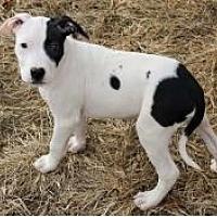 Adopt A Pet :: Riddick - Columbus, OH