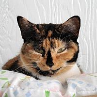 Adopt A Pet :: Aster - Palo Cedro, CA