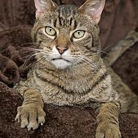 Adopt A Pet :: Arnold - St Louis, MO