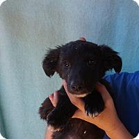 Adopt A Pet :: Nifty - Oviedo, FL