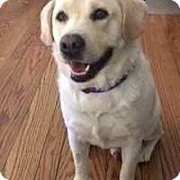 Adopt A Pet :: Vinnie - San Francisco, CA