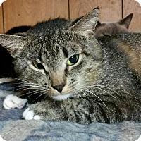 Adopt A Pet :: Link - Morganton, NC