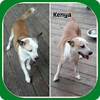 Adopt A Pet :: KENYA - Malvern, AR