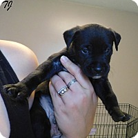 Adopt A Pet :: TJ - Mooresville, IN