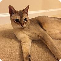 Adopt A Pet :: Jersey - Clarksburg, MD