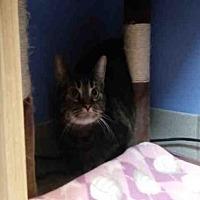Adopt A Pet :: EDAMOMA - Canfield, OH