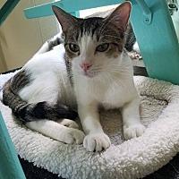 Adopt A Pet :: Reuben - Umatilla, FL