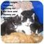 Photo 4 - Domestic Shorthair Kitten for adoption in Quincy, Massachusetts - Kittens!