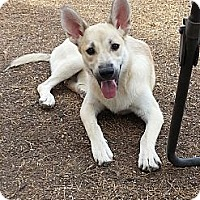 Adopt A Pet :: JoJo - Only $65 adoption! - Litchfield Park, AZ