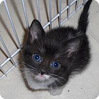 Adopt A Pet :: Foxy - Richmond, VA