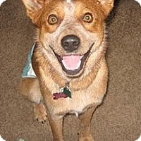 Adopt A Pet :: Bosco - Adoption Pending - Phoenix, AZ