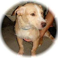 Adopt A Pet :: Benjamin - Fresno, CA