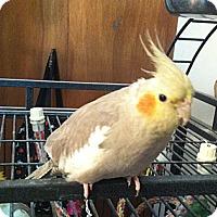 Adopt A Pet :: Joni - Lenexa, KS