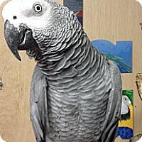 Adopt A Pet :: Macho - Woodbridge, NJ