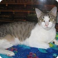 Adopt A Pet :: Cochela - Houston, TX