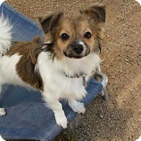 Adopt A Pet :: TUCKER (see TOBY too) - Scottsdale, AZ
