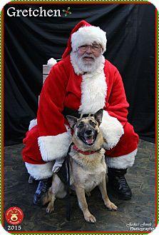 German Shepherd Dog Dog for adoption in Rockwall, Texas - Gretchen